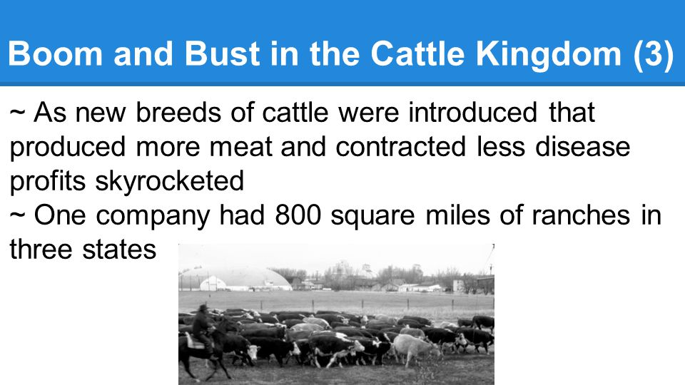 Boom and Bust in the Cattle Kingdom (3)