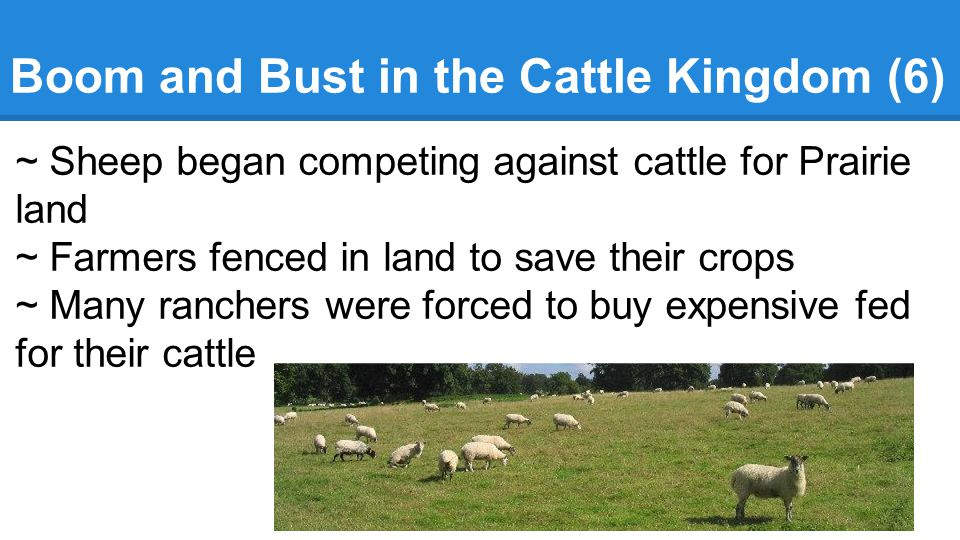 Boom and Bust in the Cattle Kingdom (6)