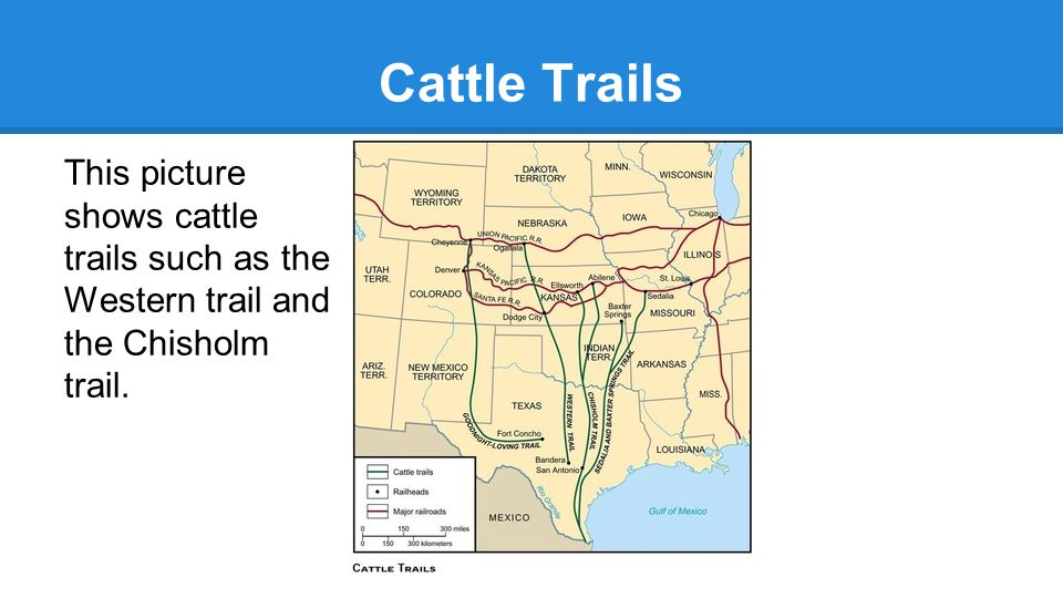 Cattle Trails This picture shows cattle trails such as the