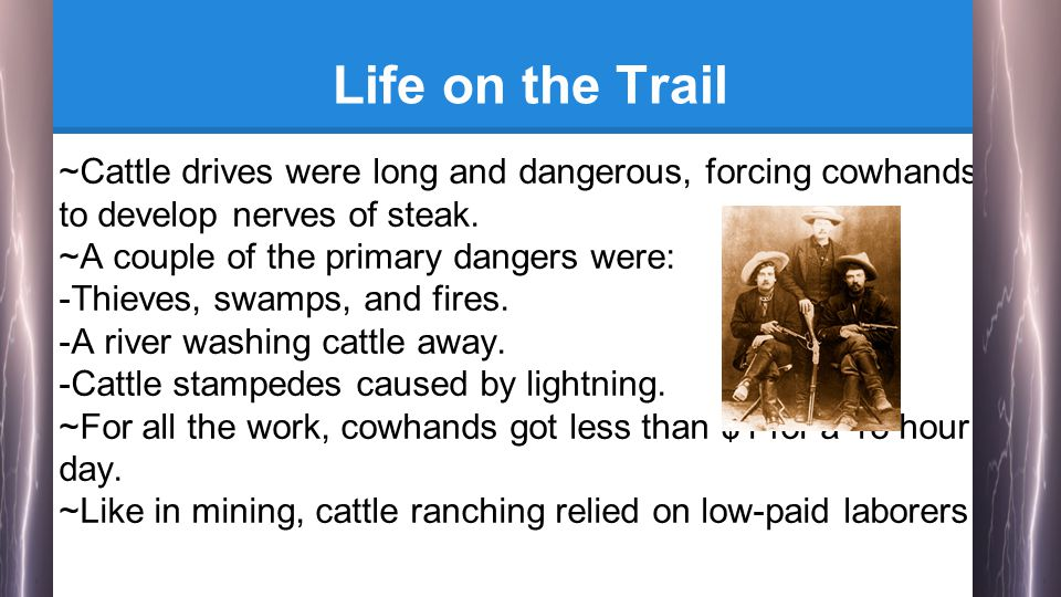Life on the Trail ~Cattle drives were long and dangerous, forcing cowhands to develop nerves of steak.