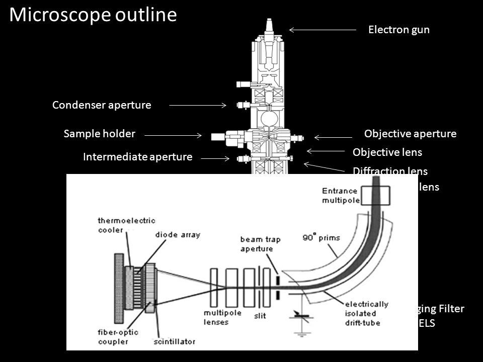 Microscope outline Electron gun Condenser aperture Sample holder