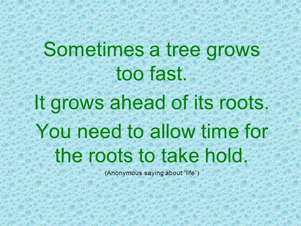 Sometimes a tree grows too fast. It grows ahead of its roots.
