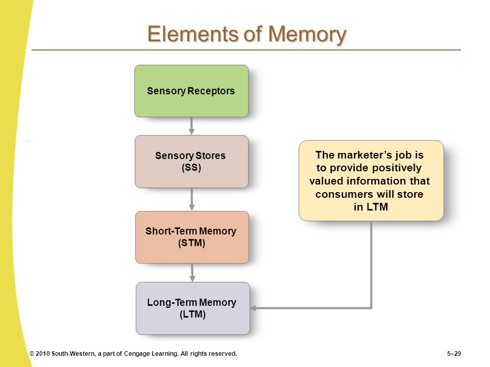 Short-Term Memory (STM) Long-Term Memory (LTM)