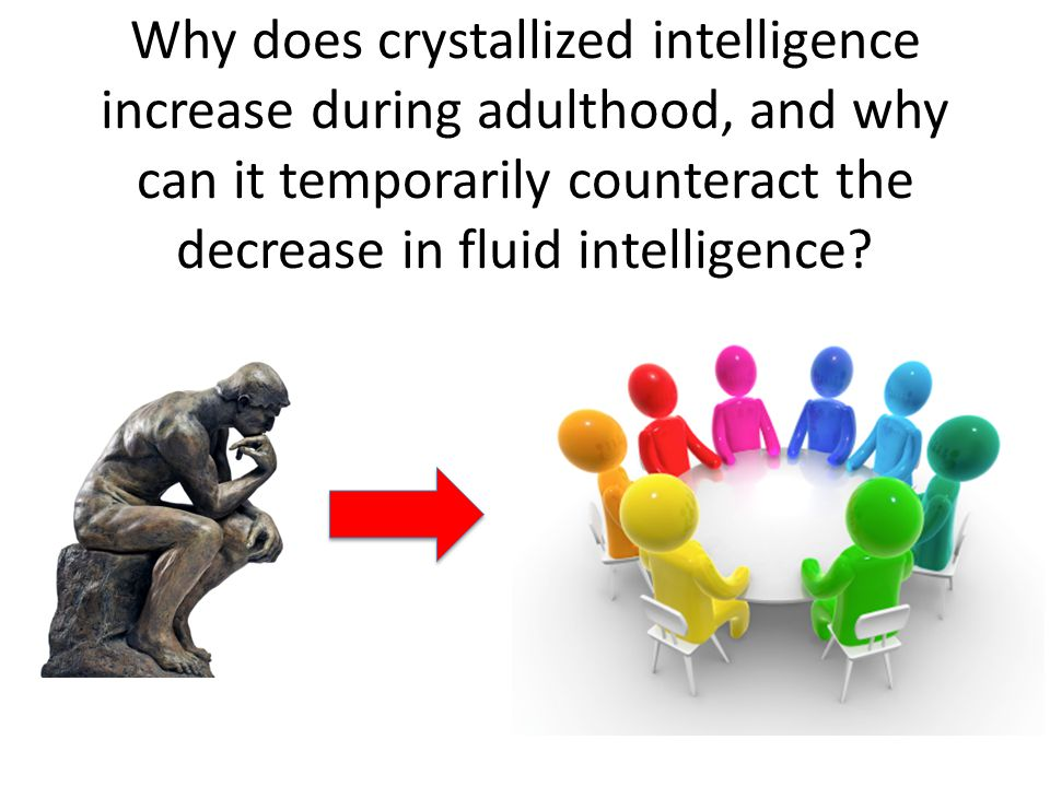 Why does crystallized intelligence increase during adulthood, and why can it temporarily counteract the decrease in fluid intelligence