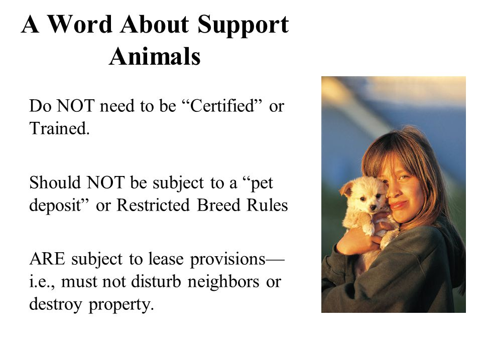 A Word About Support Animals