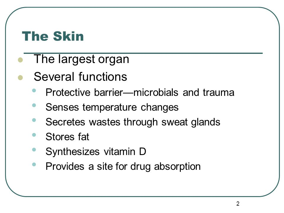 The Skin The largest organ Several functions