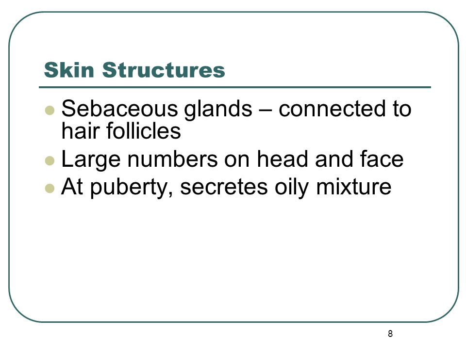 Sebaceous glands – connected to hair follicles