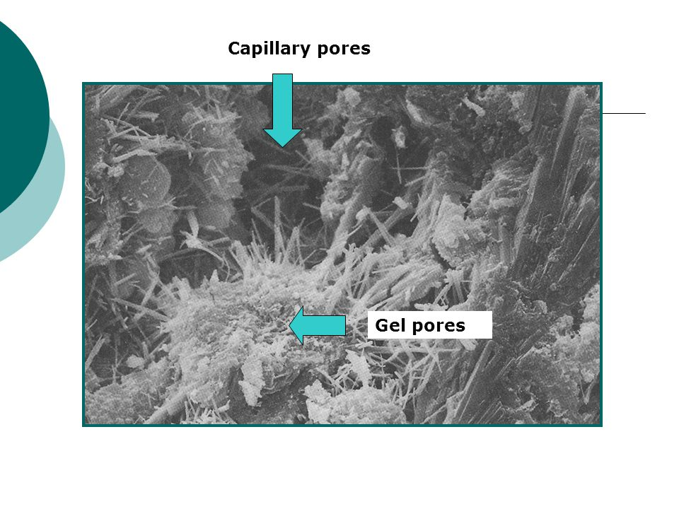 Capillary pores Gel pores SEM of 7-day paste