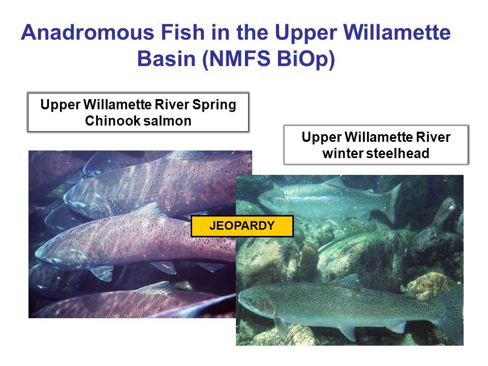 Anadromous Fish in the Upper Willamette Basin (NMFS BiOp)