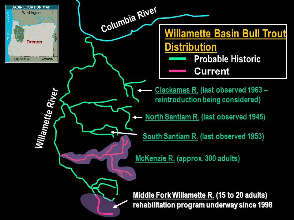 Willamette Basin Bull Trout Distribution