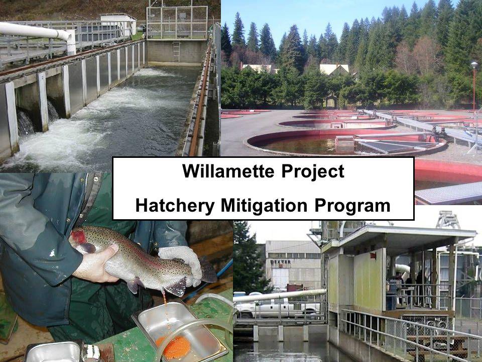 Hatchery Mitigation Program
