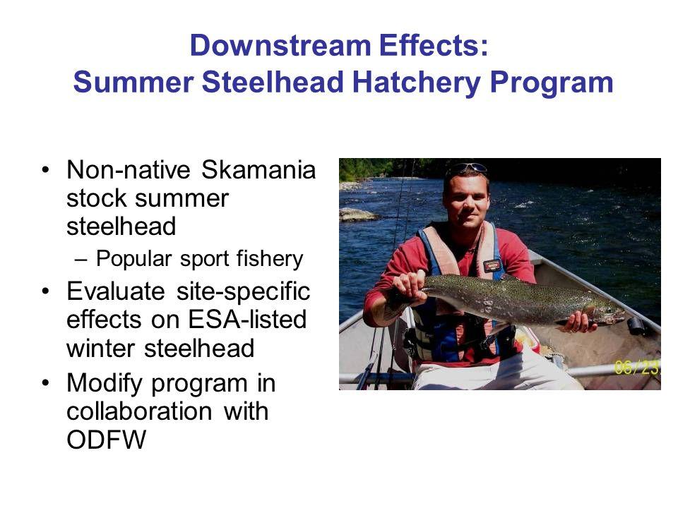 Downstream Effects: Summer Steelhead Hatchery Program