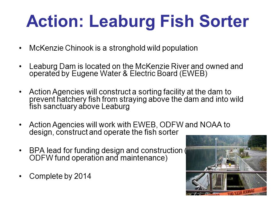 Action: Leaburg Fish Sorter