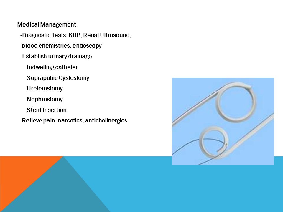 Medical Management -Diagnostic Tests: KUB, Renal Ultrasound, blood chemistries, endoscopy -Establish urinary drainage Indwelling catheter Suprapubic Cystostomy Ureterostomy Nephrostomy Stent Insertion Relieve pain- narcotics, anticholinergics