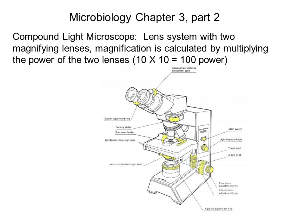 Microbiology Chapter 3, part 2