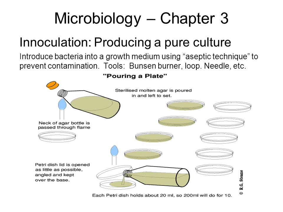 Microbiology – Chapter 3