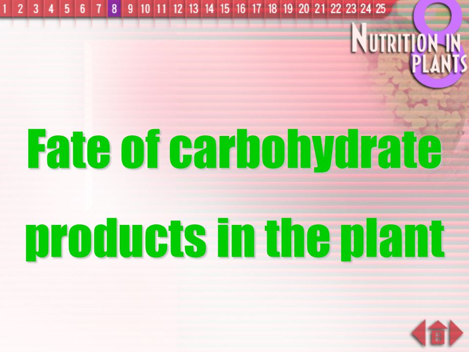 Fate of carbohydrate products in the plant