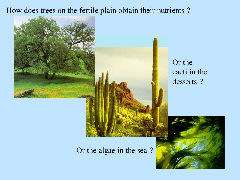 How does trees on the fertile plain obtain their nutrients