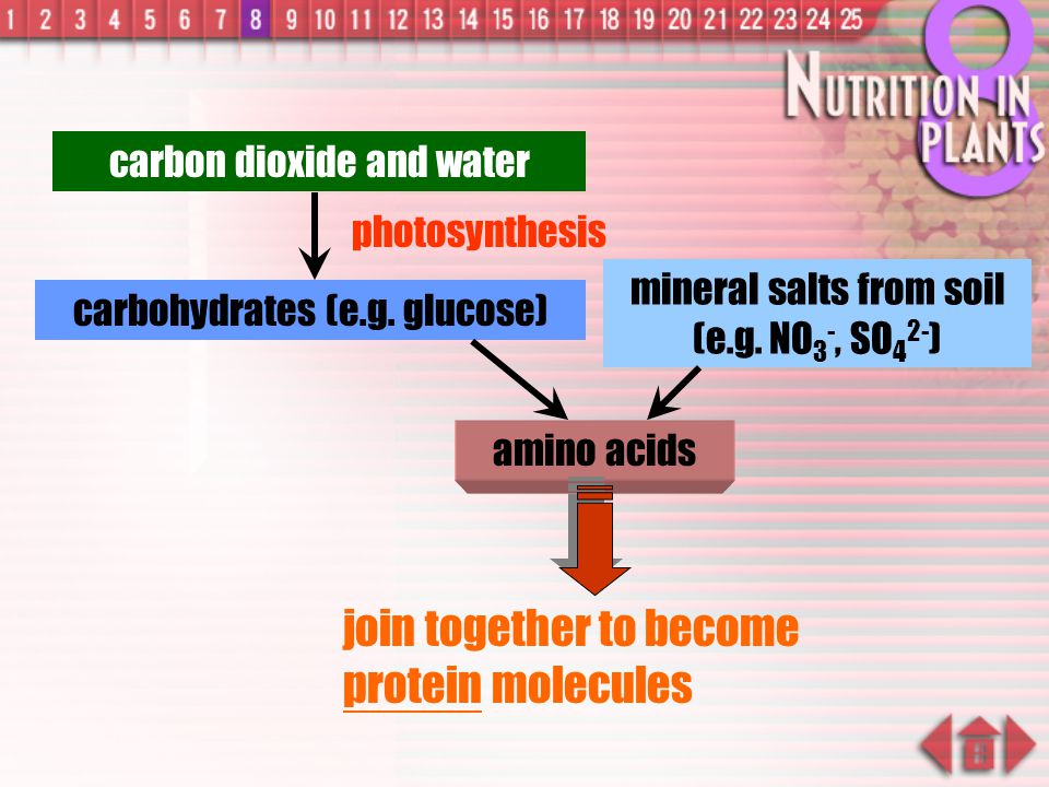 join together to become protein molecules
