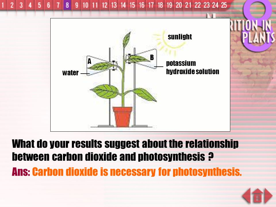 Ans: Carbon dioxide is necessary for photosynthesis.