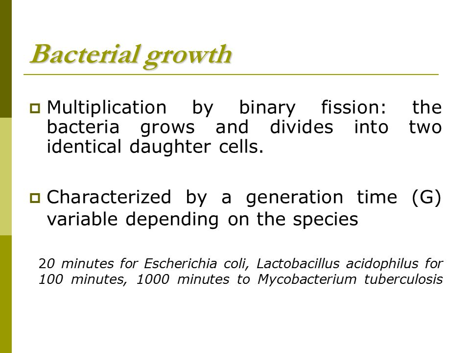 Bacterial growth Multiplication by binary fission: the bacteria grows and divides into two identical daughter cells.