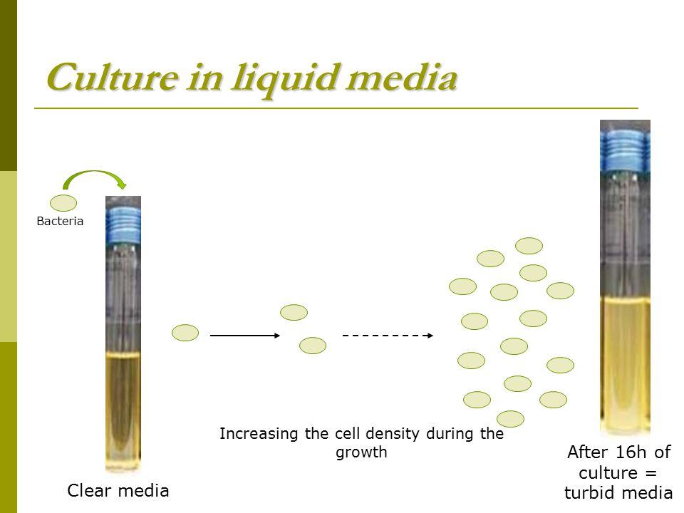 Culture in liquid media