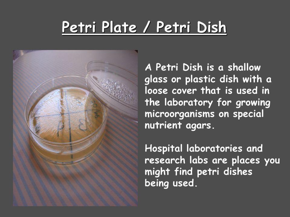 Petri Plate / Petri Dish