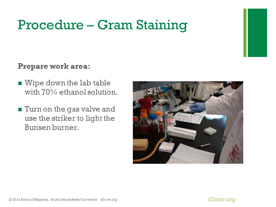 Procedure – Gram Staining