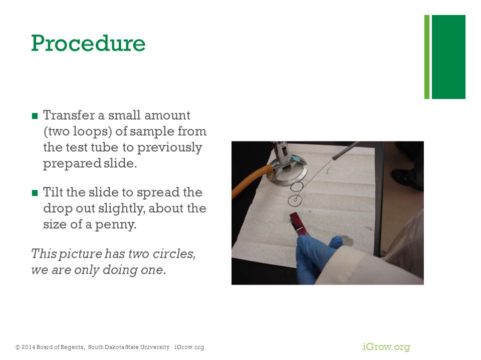 Procedure Transfer a small amount (two loops) of sample from the test tube to previously prepared slide.