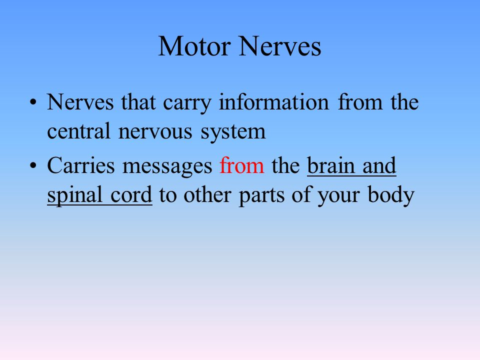 Motor Nerves Nerves that carry information from the central nervous system.