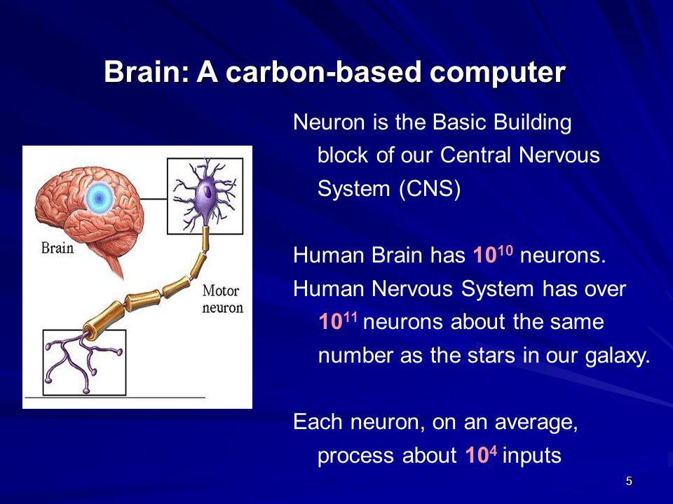Brain: A carbon-based computer
