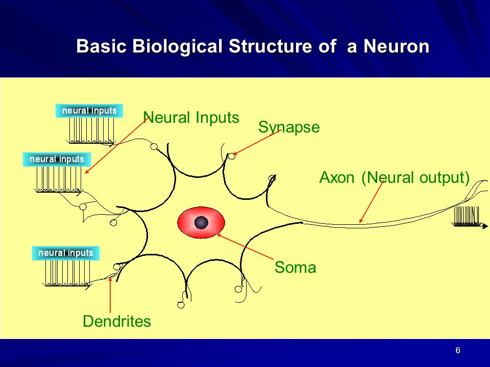 Basic Biological Structure of a Neuron
