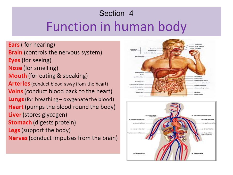 Section 4 Function in human body