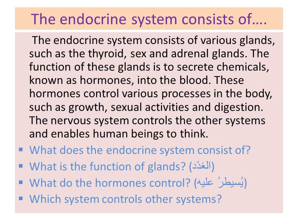 The endocrine system consists of….