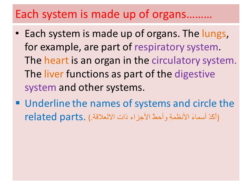Each system is made up of organs………