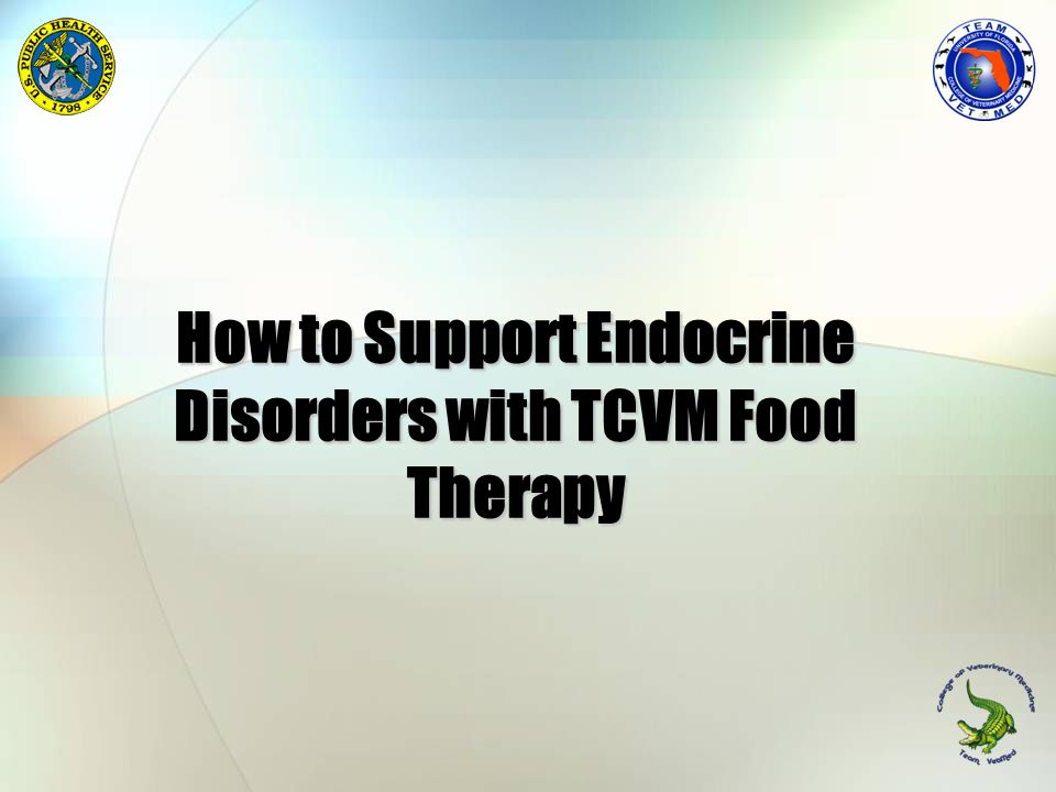 How to Support Endocrine Disorders with TCVM Food Therapy