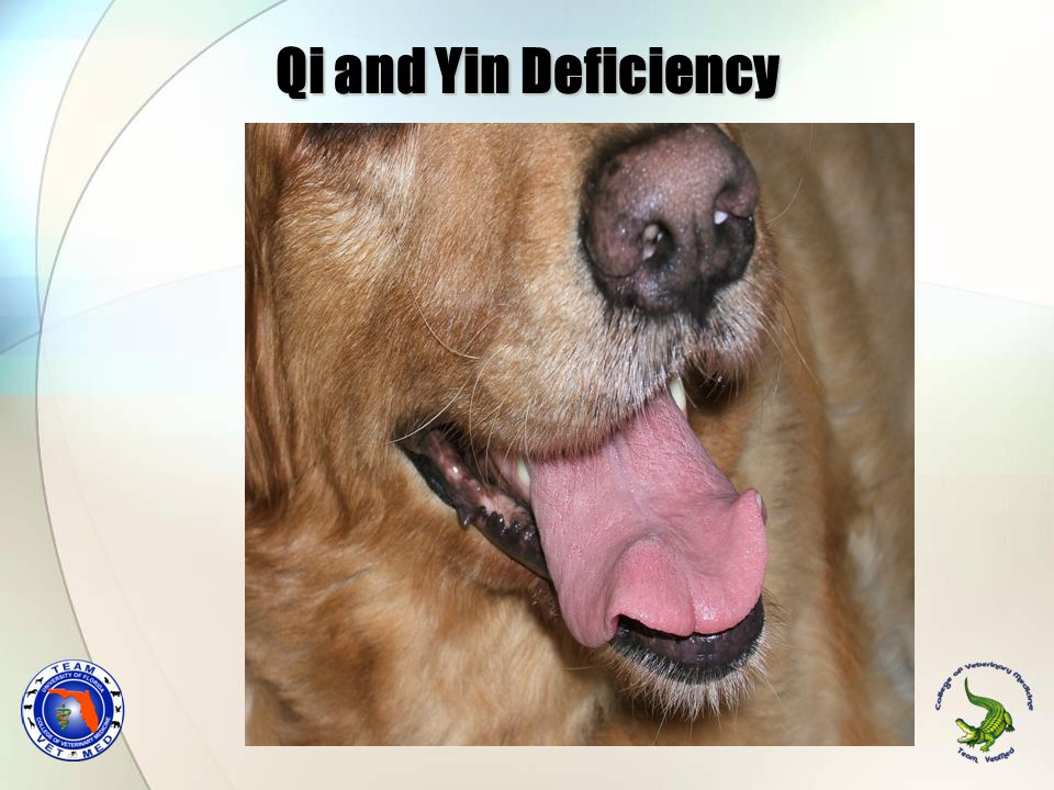Qi and Yin Deficiency