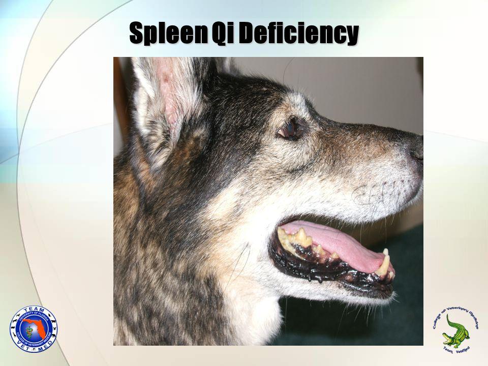 Spleen Qi Deficiency