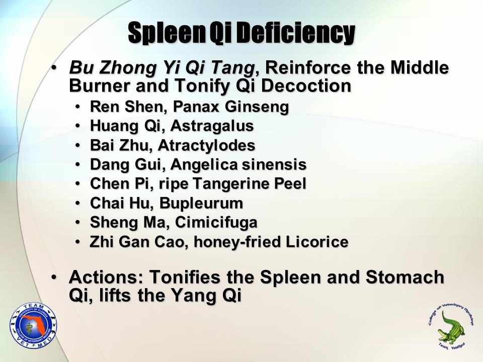 Spleen Qi Deficiency Bu Zhong Yi Qi Tang, Reinforce the Middle Burner and Tonify Qi Decoction. Ren Shen, Panax Ginseng.
