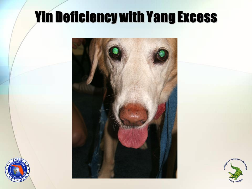 Yin Deficiency with Yang Excess