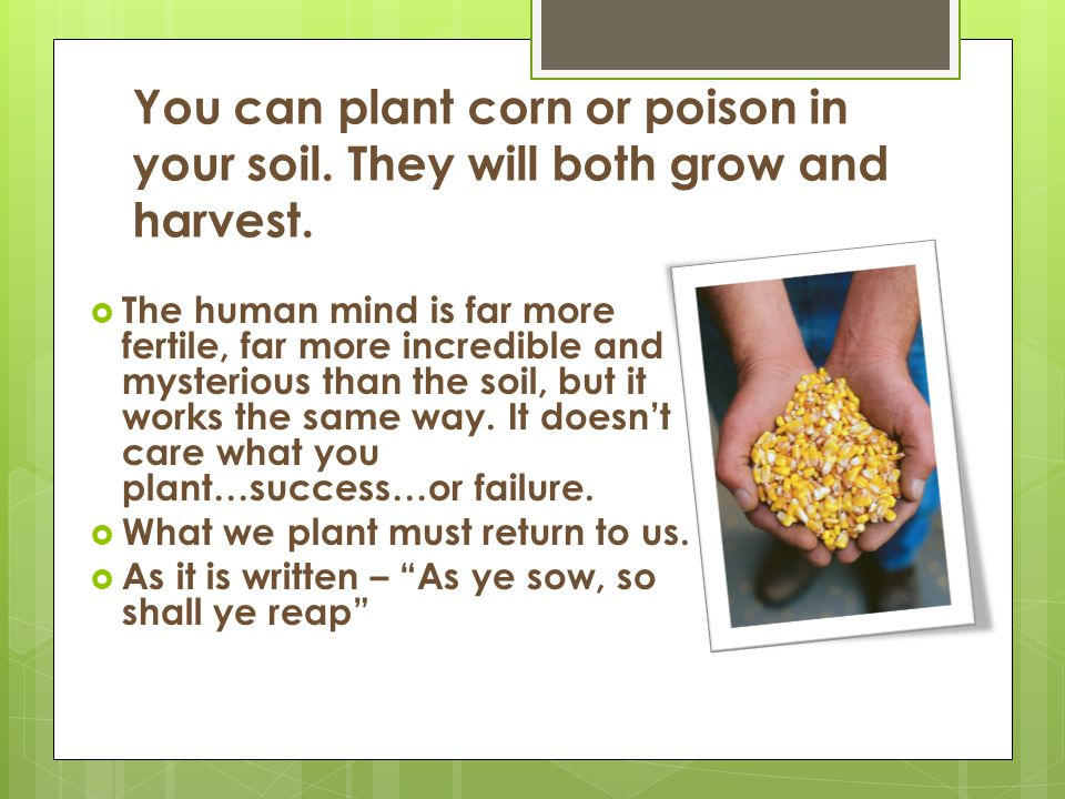 You can plant corn or poison in your soil