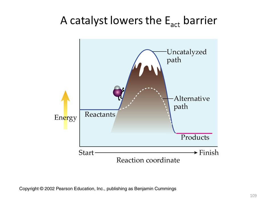 A catalyst lowers the Eact barrier
