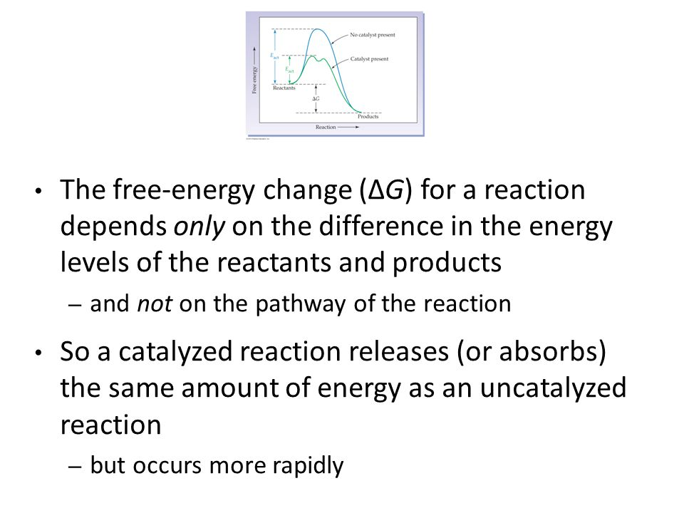 The free-energy change (ΔG) for a reaction depends only on the difference in the energy levels of the reactants and products