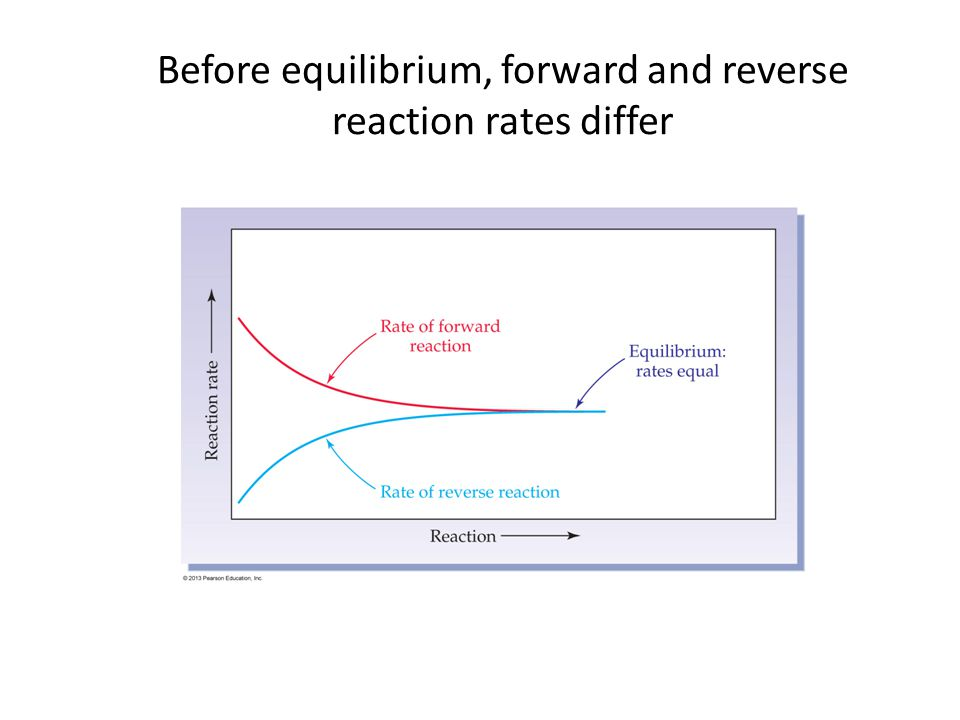 Before equilibrium, forward and reverse