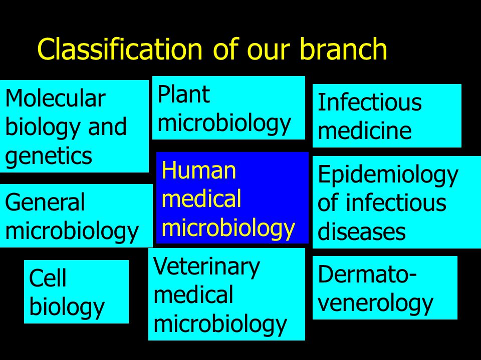 Classification of our branch