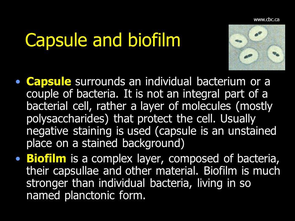 www.cbc.ca Capsule and biofilm.