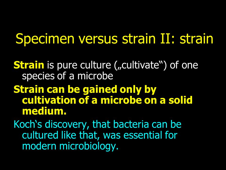 Specimen versus strain II: strain