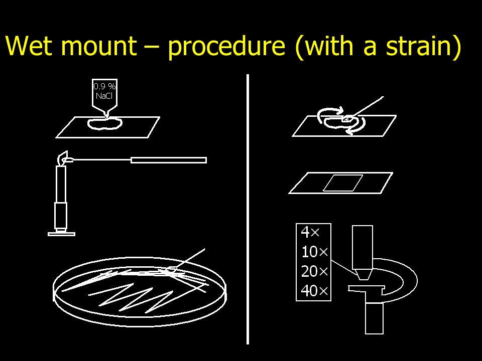 Wet mount – procedure (with a strain)