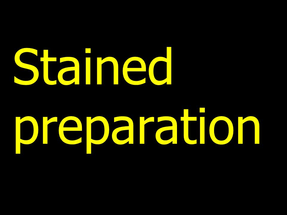 Stained preparation