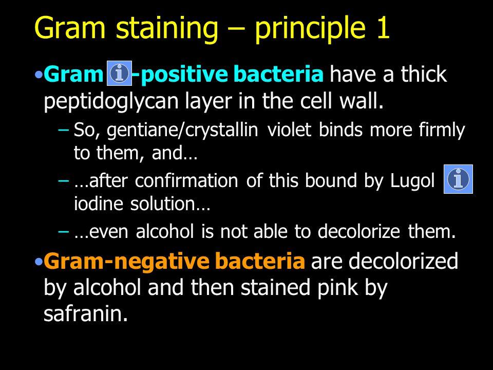 Gram staining – principle 1